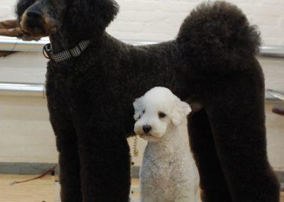 Hunde nach der Pflege