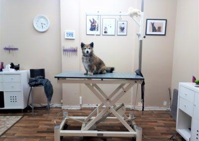 Raum Hundpflege 2