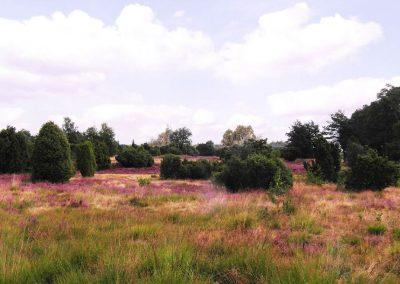 Lüneburger Heide bei Asendorf